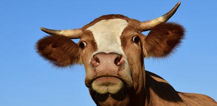 Is Your Web Host Milking You?